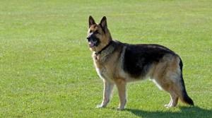 dog-317020_1280