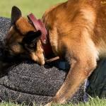 Mordidas y ataques de perros: Algunas Consideraciones