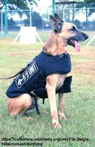 Perro Malinois Policia
